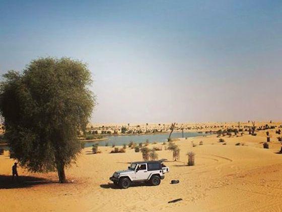 Se ressourcer à deux pas de la ville : sortie nature à Al Qudra Lakes