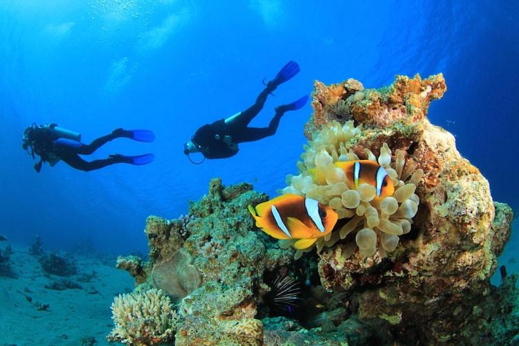 Les meilleurs spots de plongée de la péninsule arabique… pour apprendre à « décompresser » !
