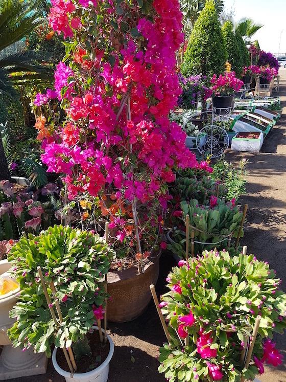 Dubai Plants souk
