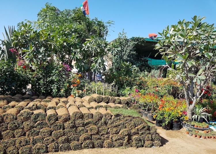 Dubai Plants Souk : un marché vert à Dubai !