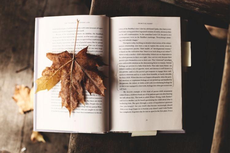 Lectures : quelques feuilles d'automne !