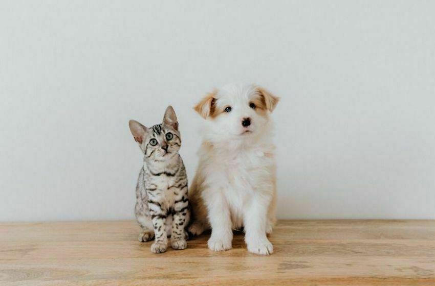 Avoir un animal à Dubai : tout ce qu'il faut savoir !