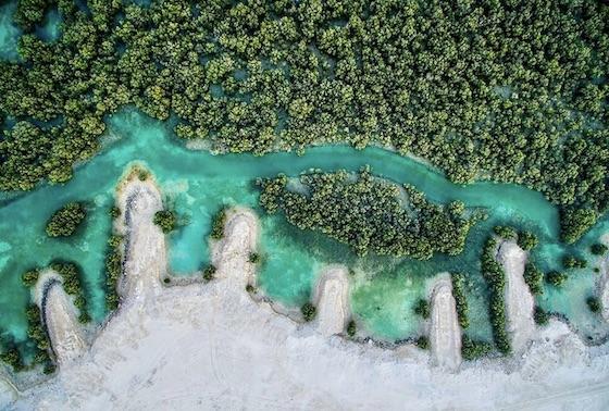 Mangrove Abu Dhabi