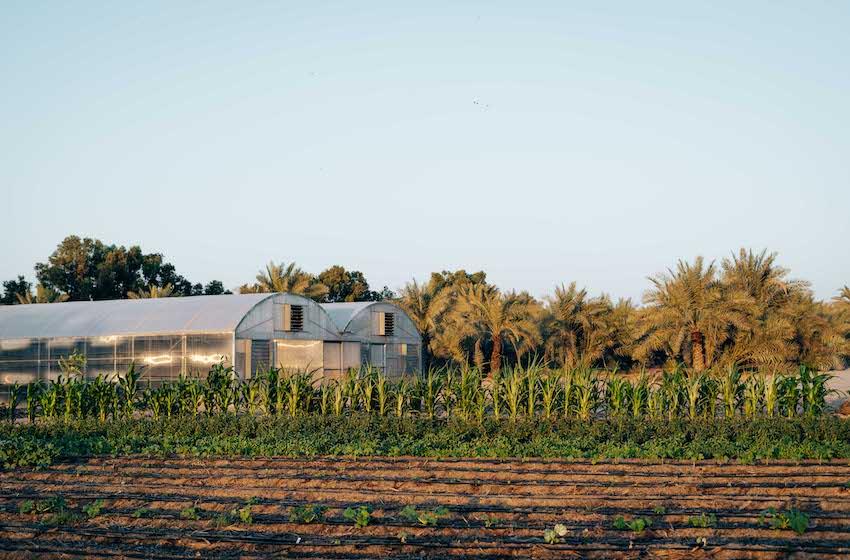 Rendez-vous à My Farm Dubai, la première ferme biologique et autonome de Dubai !
